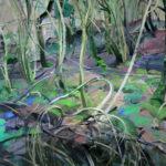 Forêts - Olivier Morel - Forêt 1, acrylique/toile, 130 x 195 cm, 2015