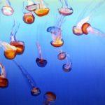 Nouveau monde, Olivier Morel - Méduses 2, acrylique/toile, 150 x 210 cm, 2012