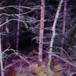 Olivier Morel - Forêt noire 10, acrylique/toile, 130 x 162 cm, 2019